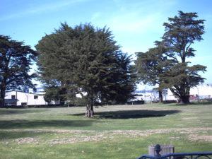 domaine de la Forêt - parc